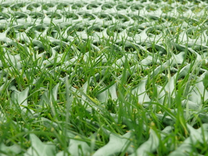 GRASSPROTECTA LITE Grass Protection Mesh ~ 10mm thick ~ 2mx10m